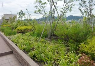 約30種類の草木類を植栽